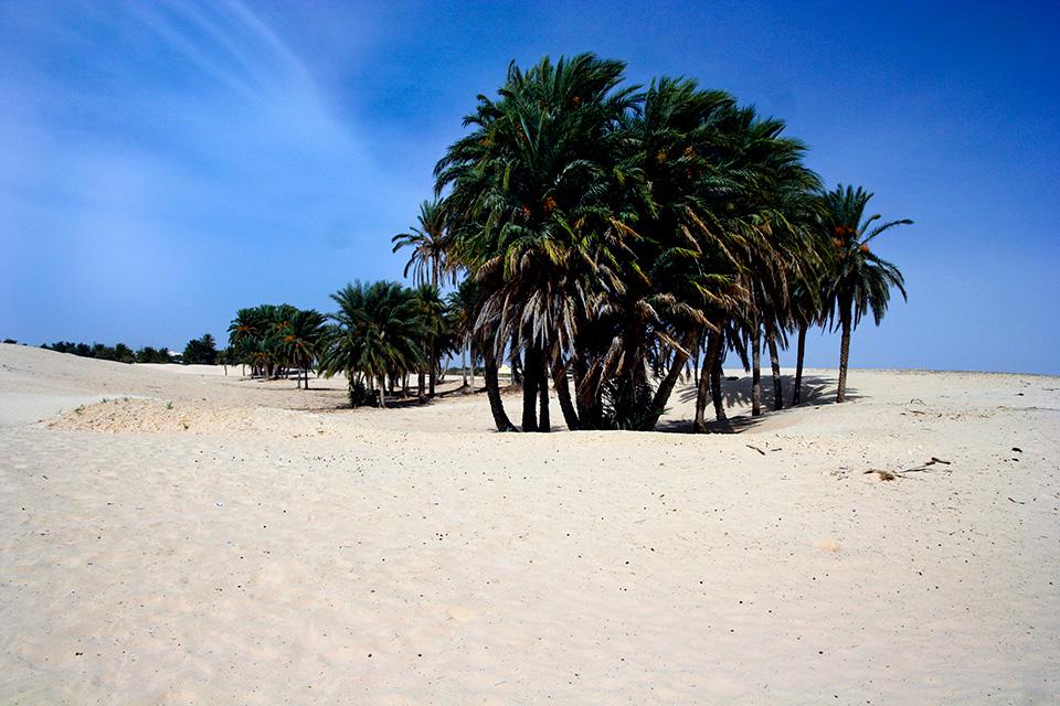sahara-oaza-tunezja-fotografia-stachowiak-mariusz