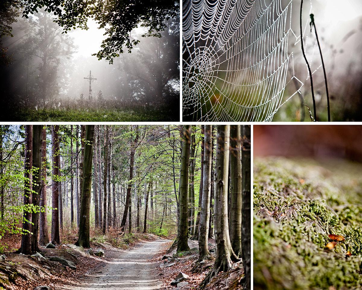 warsztaty fotograficzne chata w lesie