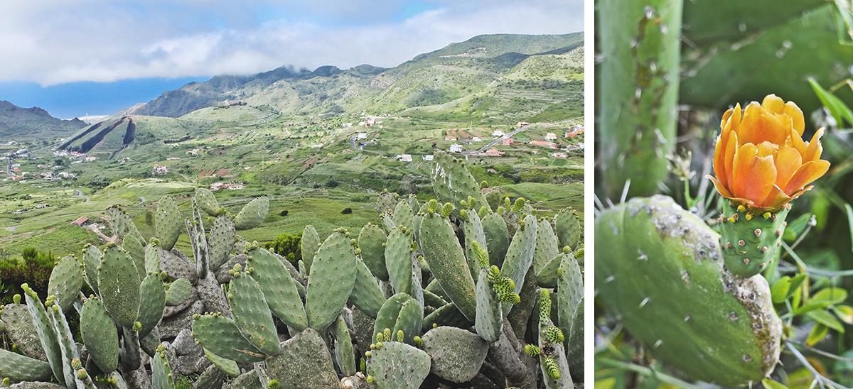teneryfa góry kaktusy fotografia z podróży stachowiak