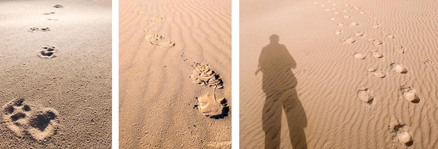 smartfon-zenfon-fotografia-smartfonem